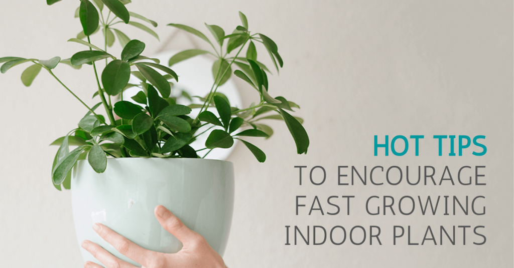 Fast growing indoor plants - Plant Love Fest