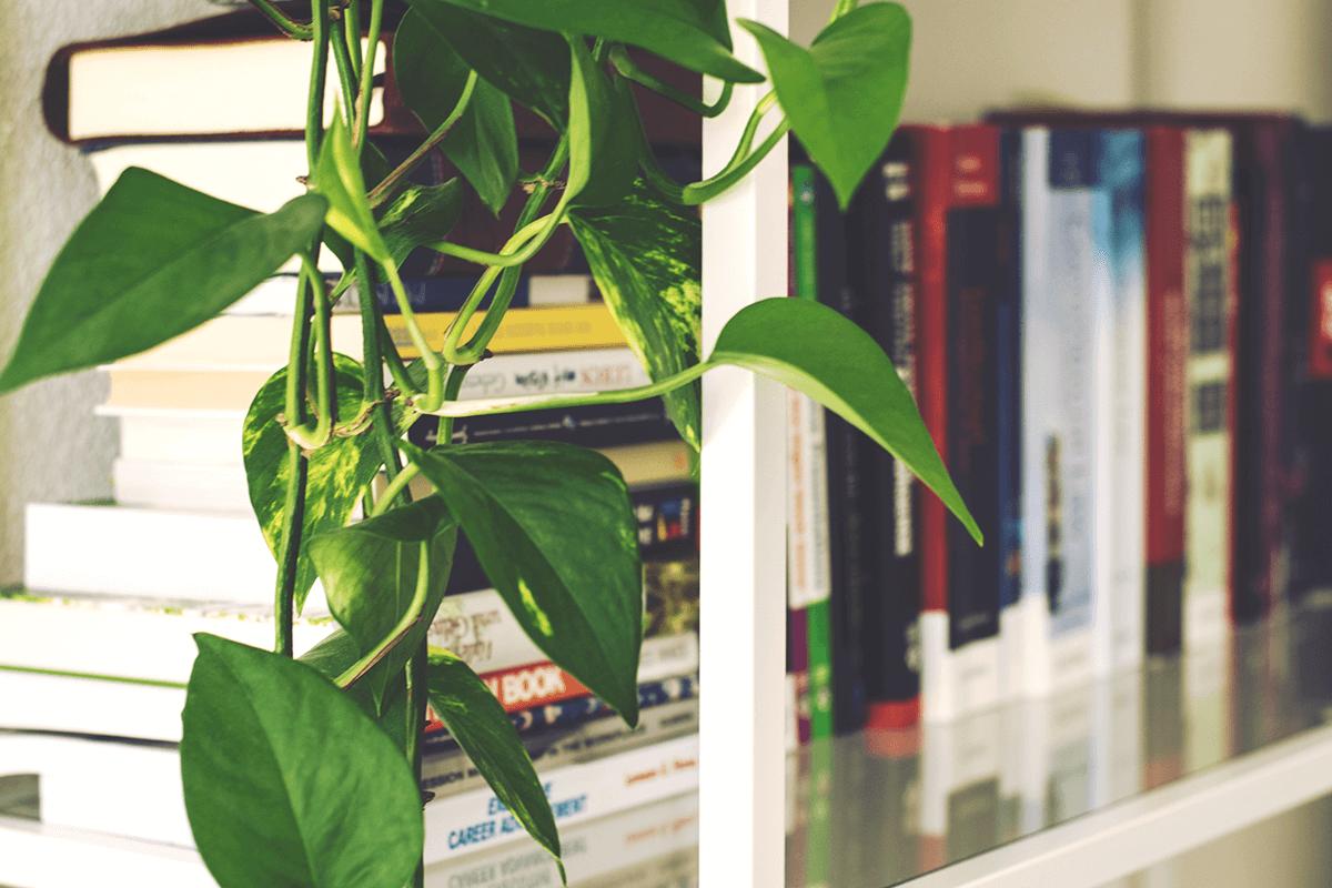 Longest living house plants