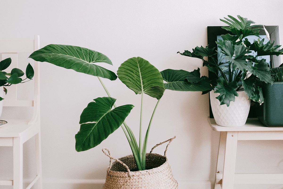 Long living plants