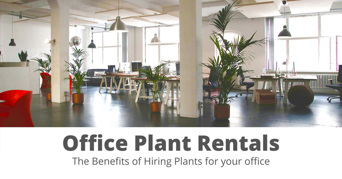Office Plant Rental