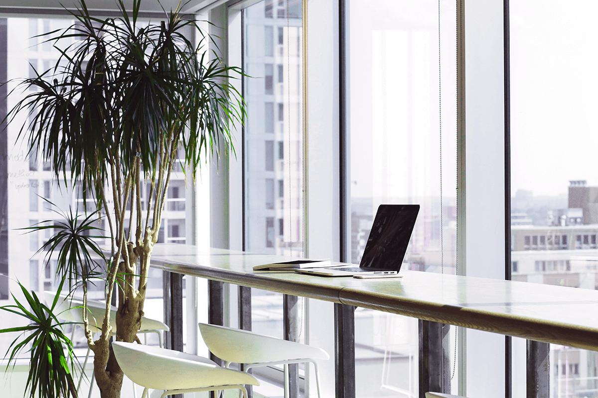 Office Plant Rental