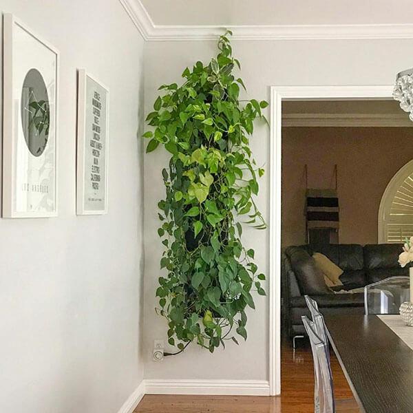 plants on wall - diynetwork.com